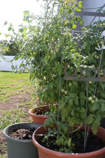 Garden tour and gardening questions for Gardening questionnaire