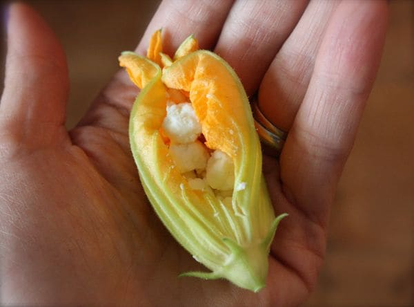 Cheese Stuffed Zucchini Flowers - Recipe - 3