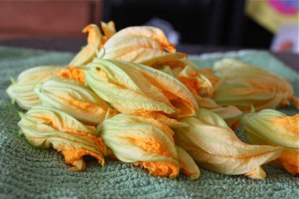 Cheese Stuffed Zucchini Flowers - Recipe - 7
