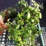 Garden March 2012 01