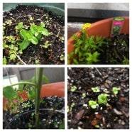Garden Update March3